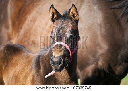 Foal and mare in pasture