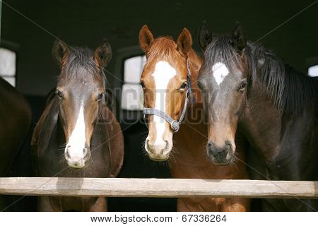 Youngsters in the barn