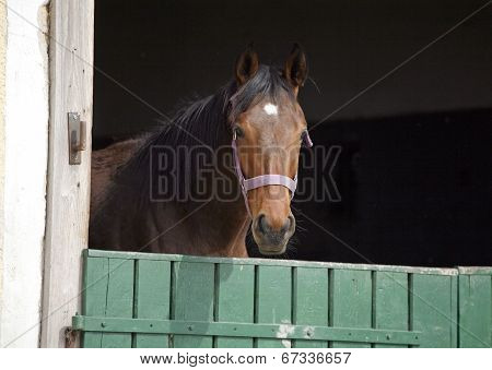 Horse standing in the barn
