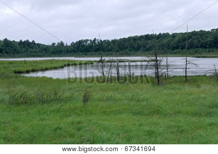 Rice Lake Landscape At Breezy Point