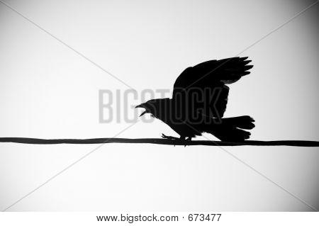 Llamar a Crow