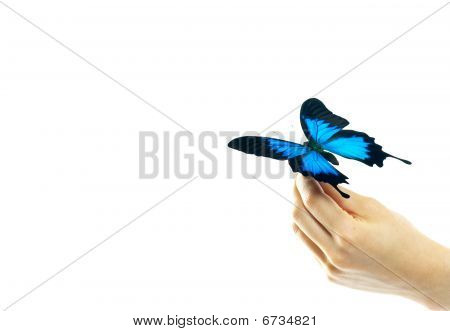 Hand And A Butterfly