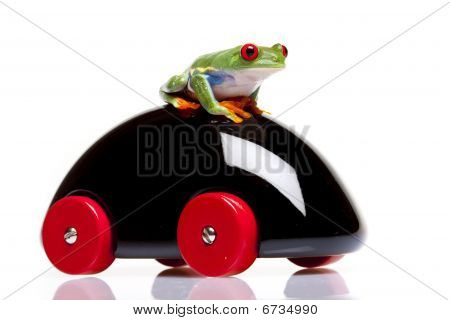 Frog and Toy!