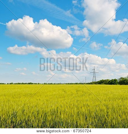 Wheat Field, Blue Sky And Power Lines