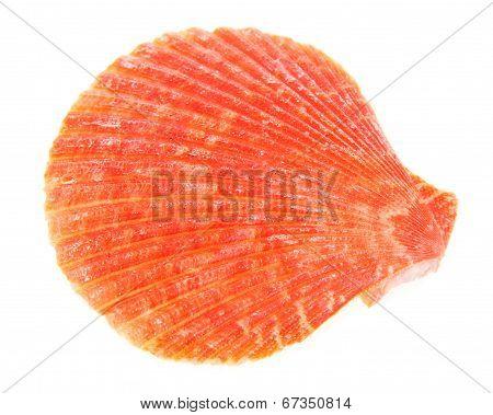 Red cockleshells