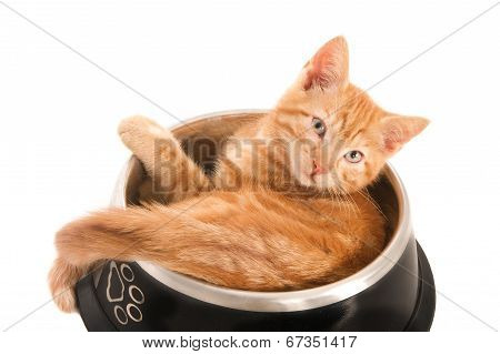 Cat in a dog's bowl