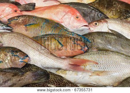 Various Fresh Fish At A Fish Market
