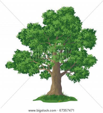 Oak tree and green grass
