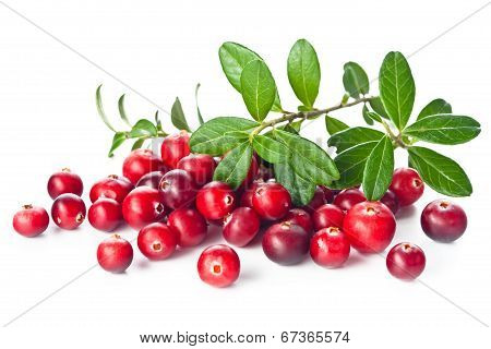 Ripe Cranberries With Leaves On White Background