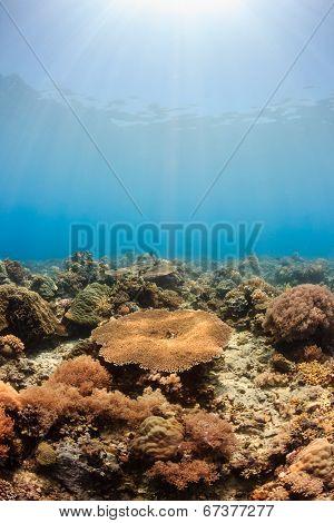 Sunbeams on a coral reef
