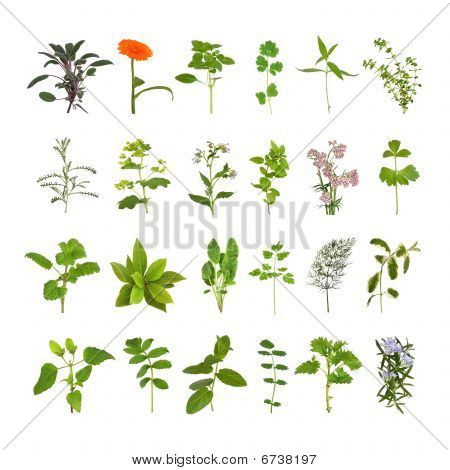 Kruid bloem en blad collectie