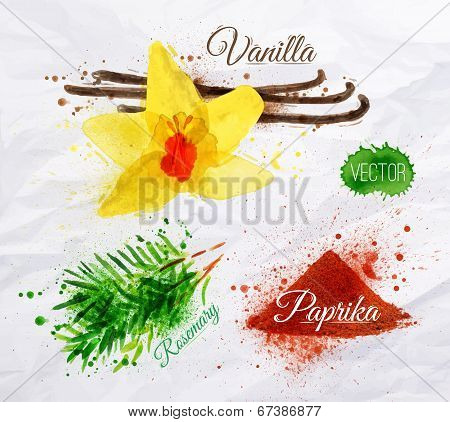 Spices herbs watercolor vanilla, rosemary, paprika