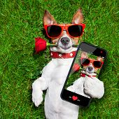 picture of dog-rose  - dog with a red rose in his mouth taking a selfie - JPG