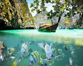 stock photo of phi phi  - Underwater picture with fish and traditional longtail boat in Maya bay - JPG