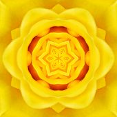 pic of kaleidoscope  - Yellow Mandala Concentric Rose Flower Kaleidoscope Center - JPG