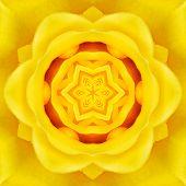 foto of kaleidoscope  - Yellow Mandala Concentric Rose Flower Kaleidoscope Center - JPG