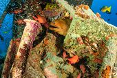 picture of undersea  - Giant Moray Eel and glassfish on an undersea wreck - JPG