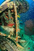 foto of grouper  - Grouper glassfish and other tropical fish around a manmade piece of wreckage - JPG