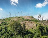 picture of deforestation  - Deforestation nature background - JPG
