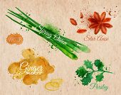 Постер, плакат: Spices herbs watercolor star anise parsley spring onion ginger root kraft