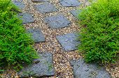 picture of rainy season  - The garden plant and stone in rainy season - JPG