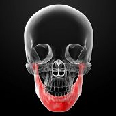foto of jaw-bone  - 3d rendered illustration  - JPG