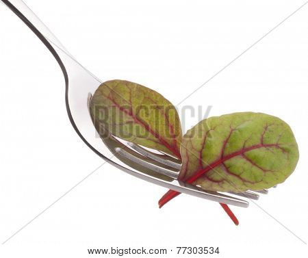 Fresh mangold salad on fork isolated on white background cutout. Healthy eating concept.
