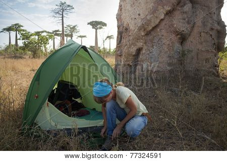Hiker wearing shoes after night in the tent set by huge baobab tree in African savanna.
