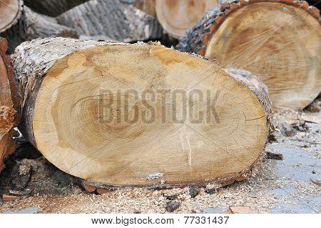 Tree Rings Highlighting Age