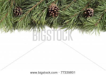 Christmas fir branches and bumps on a white background with copyspace