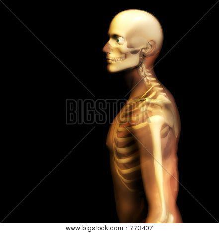 Man Bone 18
