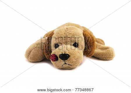 Stuffed Soft Lying Toy Dog With Labybird On Its Nose Over White Background