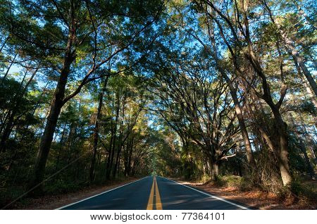 Canopy Road in the Afternoon