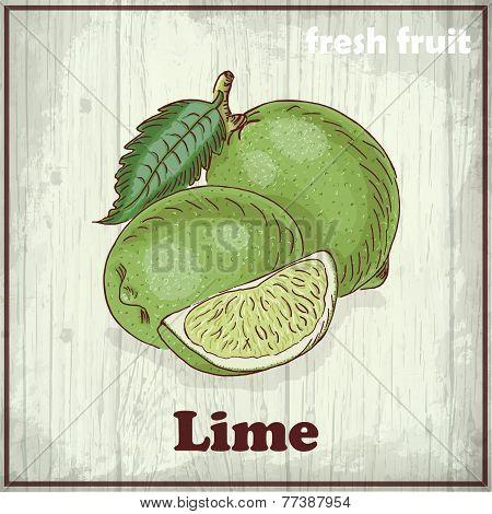 Fresh Fruit Sketch Background. Vintage Hand Drawing Illustration Of Lime