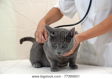 Young Woman Veterinary Surgeon