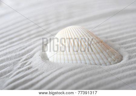 Cockleshell On Sea Sand