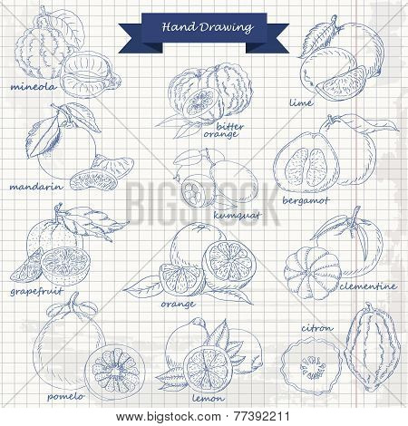 Set Of Citrus Fruits On Paper. Vector Hand Drawing Sketch Illustration
