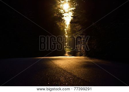 Side road through dense forest , barely lit by the sun.