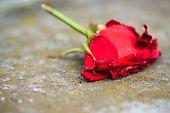 picture of broken heart flower  - Macro close - JPG