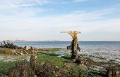 picture of wrecking  - Remnants of an old ship wreck on the Dutch coast at low tide - JPG