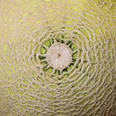 stock photo of musky  - Rock melon skin for use as a background - JPG