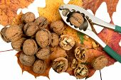 stock photo of nutcracker  - several walnuts and nutcracker with autumn leaves - JPG