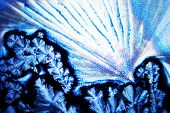 picture of mustering  - Micro Photo of Micro Crystals in polarized Light - JPG