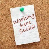 pic of suck  - The phrase Working Here Sucks - JPG