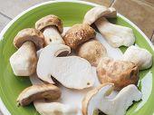 stock photo of boletus edulis  - Boletus edulis aka penny bun or porcino mushroom or cep - JPG