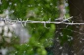 picture of spiderwebs  - Barbed wire and spiderweb - JPG