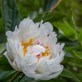foto of manor  - Pictures of Flowers from Coton manor in Northamptonshire uk - JPG