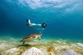 stock photo of hawksbill turtle  - Underwater photo of young woman snorkeling and swimming with Hawksbill sea turtle - JPG