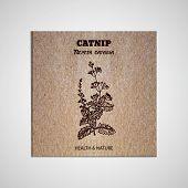 pic of catnip  - Health and Nature Collection - JPG