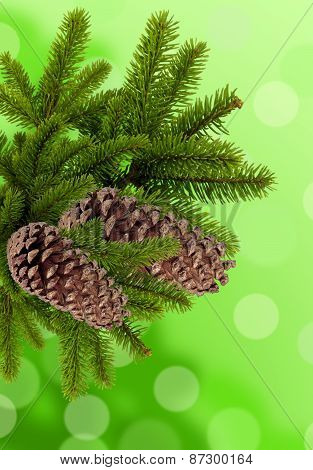 Green Branch Of Christmas Tree With Cones Over Green Background